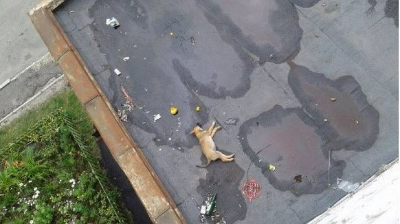 Пьяный оренбуржец сбросил из окна 12-го этажа щенка