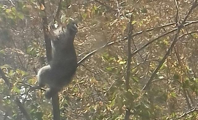 Жители Новотроицка поймали енота, сбежавшего из зоопарка