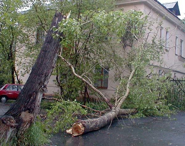 В Кувандыке на машину с пассажирами упало дерево