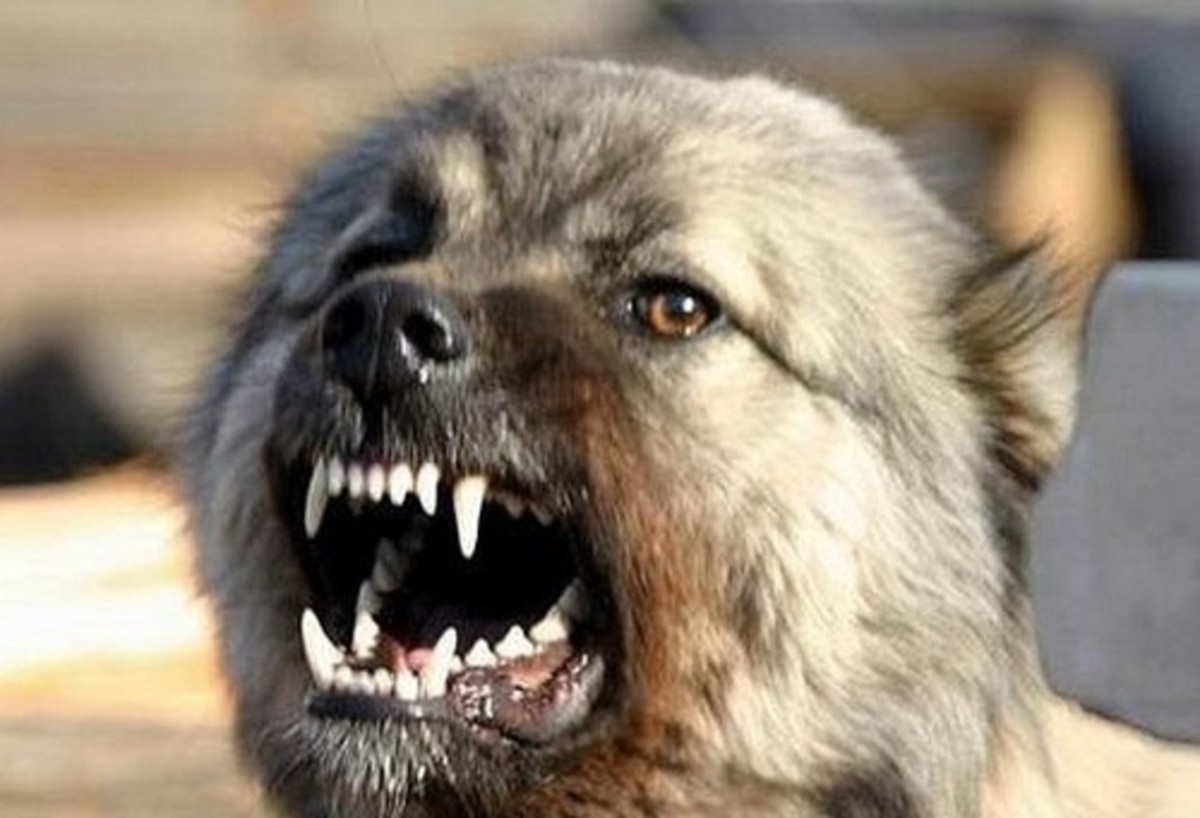 В Оренбурге агрессивная собака покусала своих хозяев